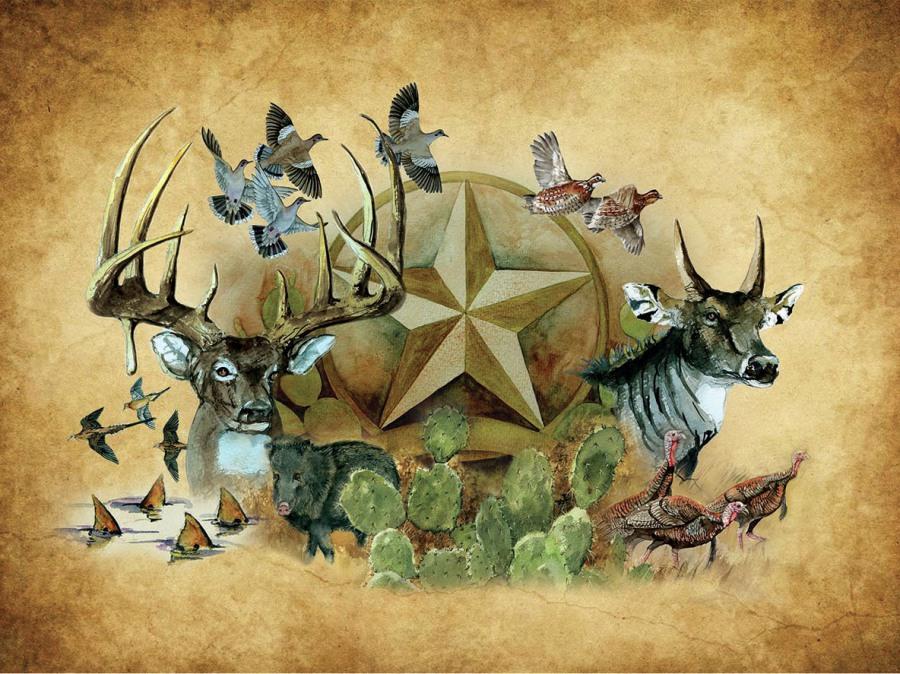 Deer & Javelina - South Texas Wildlife